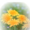 花エピソード1:教室に花をの画像