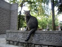 ジャングル公園の猫