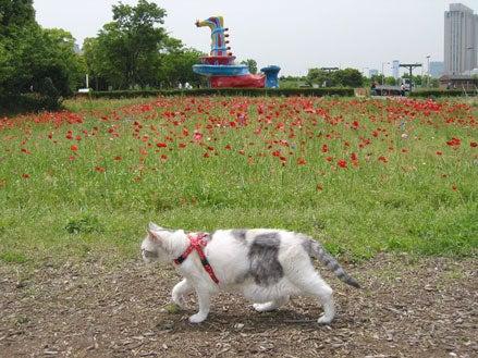お花畑とモカタン1