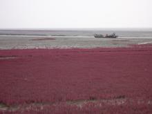 紅海灘12