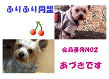 ペットは家族/Every day with AZUKI