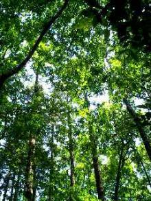 八木が谷北市民の森4
