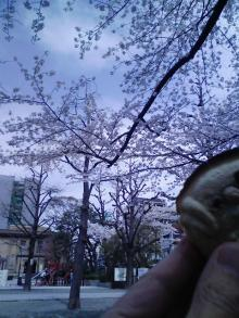 浪花屋本店の鯛焼きと横網公園の桜