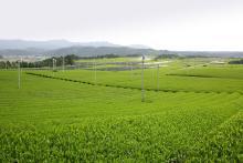 滋賀県甲賀市 土山町商工会-茶園