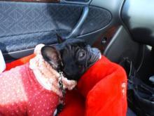 車中でございます。