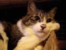猫紙芝居8