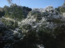 雪景色の木