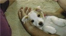 puppy kimba