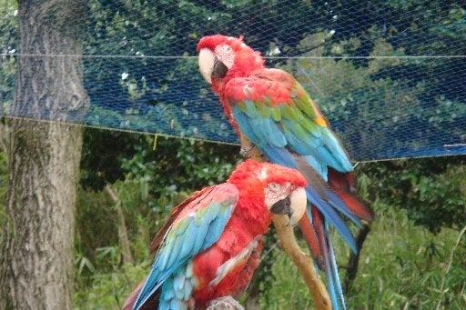 tamazoo-bird-080419
