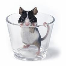 2008マウス