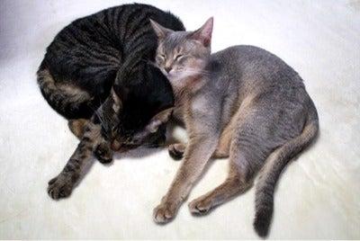 すみれ色の猫たち-fuusora1