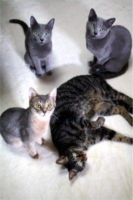 すみれ色の猫たち-fuuhanalunasora2