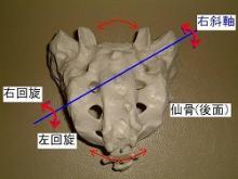 仙骨(右斜軸)