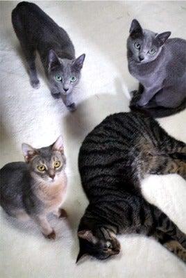 すみれ色の猫たち-fuuhanalunasora1