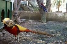 カラフル鳥