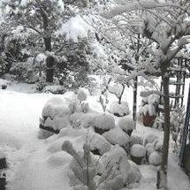 雪また雪、春の淡雪
