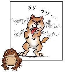 ヒキガエルの毒でラリるイヌ