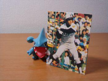 プロ野球カード倶楽部-マユミ1