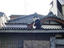 阿佐ヶ谷の猫さん