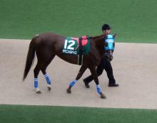【競馬よ今宵も有難う】馬、牧場、富士山の写真と生活を懸けた競馬予想!-ヤマニンメルベイユ