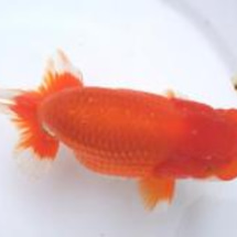 金魚の病気 原因編