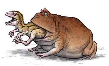 恐竜の幼体を喰らうベルゼブフォ
