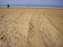 西中島 砂浜2