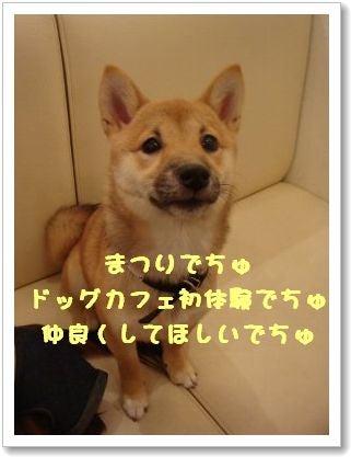 リフレサロン副店長犬マロ日誌