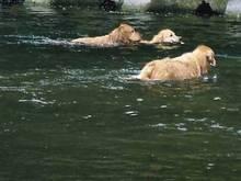 泳いでる写真を見て涼しくなって下さいね。