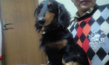 鬱と犬-CA390490.JPG