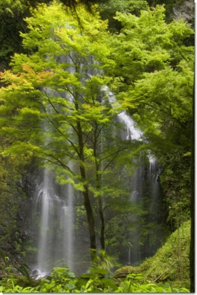 うなぎ滝(下部)