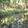 阿蘇の水源の画像