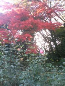 旧古河庭園Ⅱ