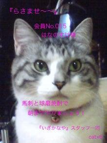 お転婆ネコ「はなのすけ」-1