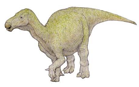 イグアノドン 学名(Iguanodon Bernissartensis )   川崎悟司 ...