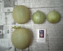 8月3日収穫