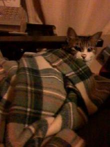 ラッコ毛布好き