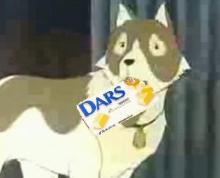 ダースの犬