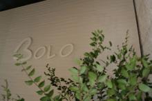 bolo_showroom
