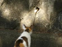 シマヘビとネコ
