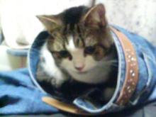 ヤドカリ猫