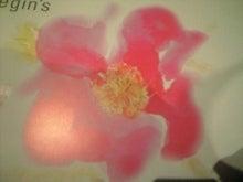 はまなすC薔薇科A390055.jpg
