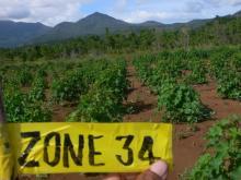 Jatropha(ナンヨウアブラギリ/ヤトロファ)による「みどりの油田プロジェクト」再生可能エネルギーの普及を目指して-Nov2008 Palawan zone34