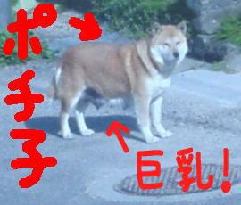 近所の野良犬ポチ子の写真