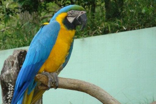 tamazoo-bird01-080419