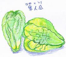 J.ヤンズのつれづれ絵日記道中-隼人瓜