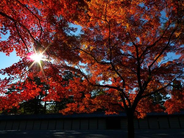西陣に住んでます-京都御苑
