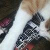 読書と猫の画像