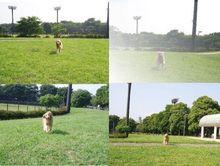 すごいキレイな芝生。ボール投げも最高☆