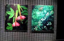 アンデス植物